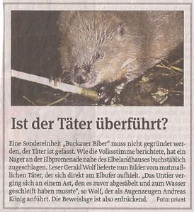 biber_in_volksstimme_10_1_2013_kl