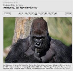 gorilla_kl