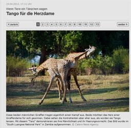 griraffe_kl