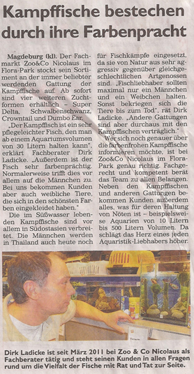 kampffische_3_3_2013_generalanzeiger_kl