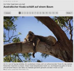 koala_kl