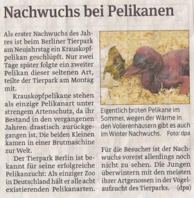 pelikane_volksstimme_9_1_2013_kl