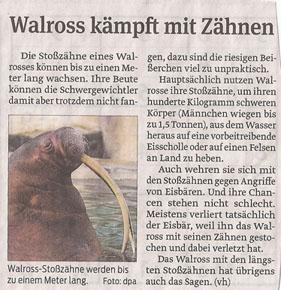 walross_12_2_2013_volksstimme_kl