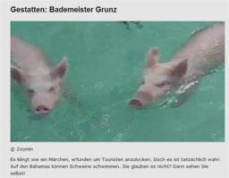 schwein_kl