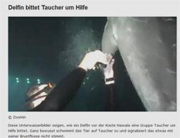 delphin_kl
