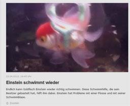 fisch_kl