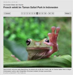 frosch_kl