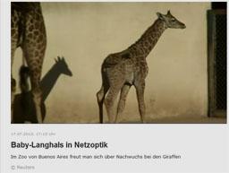 giraffe_kl