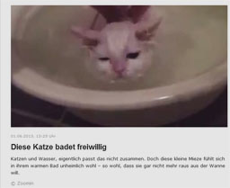 katze_kl