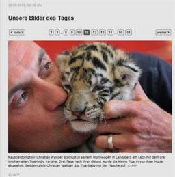 tiger_kl