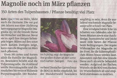 magnolie_15_3_2013_volksstimme_kl