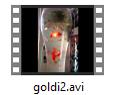Goldfisch-Film
