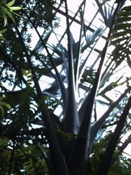 botanischer_garten13.jpg