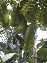 botanischer_garten14.jpg