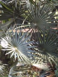 botanischer_garten15.jpg