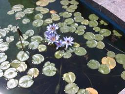 botanischer_garten2.jpg