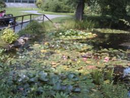 botanischer_garten25.jpg