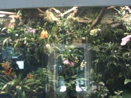 botanischer_garten27.jpg