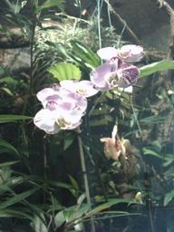 botanischer_garten28.jpg