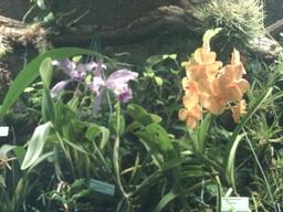 botanischer_garten29.jpg