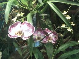 botanischer_garten30.jpg