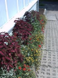 botanischer_garten5.jpg