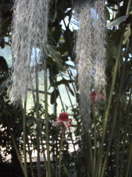 botanischer_garten6.jpg