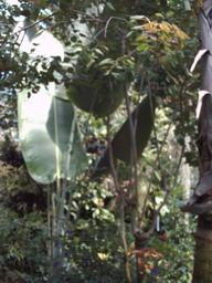 botanischer_garten8.jpg