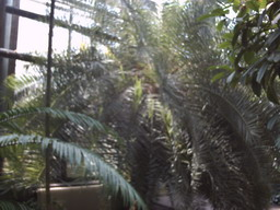 botanischer_garten9.jpg