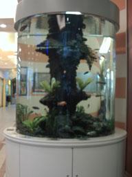 jena-stadt_-_aquarium_im_einkaufscenter.jpg